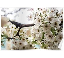 Speckled Blossoms Poster