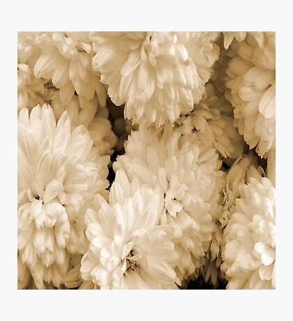 Monochrome Abstract Mums Photographic Print