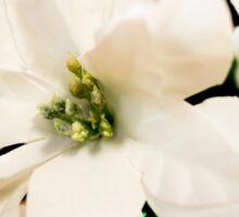 White Petals Sticker