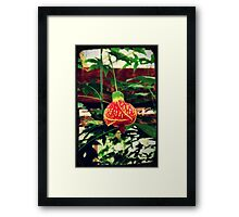 Tropical Flower at The Conservatory, Seattle WA Framed Print