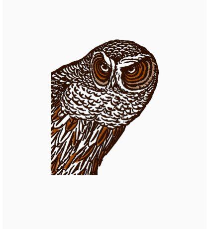 Brown Owl Sticker