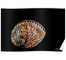 Flame Abalone Poster