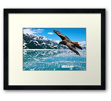 Eagle Flying over the Alaska Mountain Lake Reflexion Framed Print