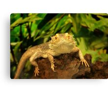 Bearded Dragon Canvas Print