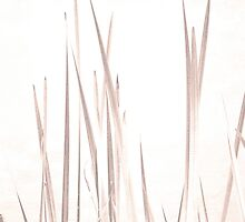 Reeds by Laurie Minor