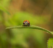 Ladybug by Cynthia Bandurek