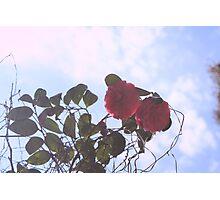 Sky Flowers Photographic Print