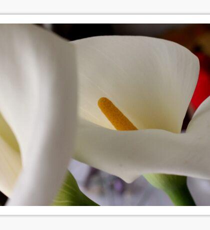 The flower itself... Sticker