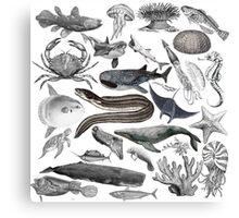 Vintage Ocean Drawing Compilation Canvas Print