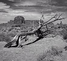 Gnarled Beauty In the Valley by Lucinda Walter