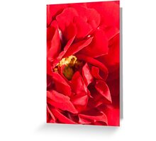 Valentine Red Rose Greeting Card