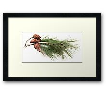 Branch of pine with the pinecones Framed Print