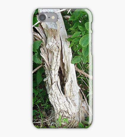 Decayed Tree Stump iPhone Case/Skin
