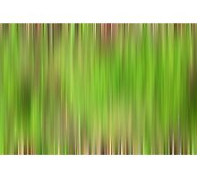 Forest Moss Photographic Print