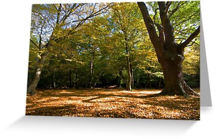 Carpet of Leaves by Nigel Bangert