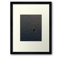 Lonely Duck Swimming at Lake at Sunset Time Framed Print