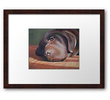 Bailey the Chocolate Lab Framed Print
