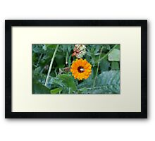 Yellow Flower Green Insect Framed Print
