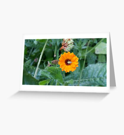 Yellow Flower Green Insect Greeting Card