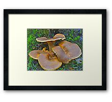 Jack-O-Lantern Mushrooms Framed Print