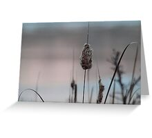 Icy pond at sunset Greeting Card