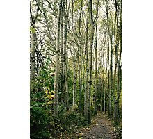 Trees are giants. Photographic Print
