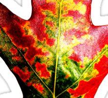 Colorful Autumn Oak Leaf Sticker