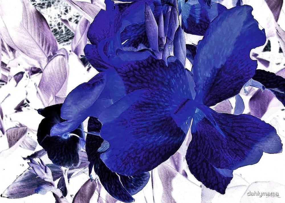 Blue Canna Lily by Shawna Rowe