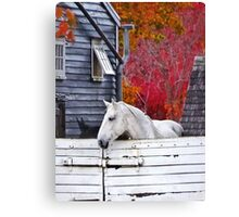 Autumn Farm With White Horse Canvas Print