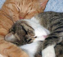 Sleeping Sweeties Sticker