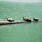 Three Turtles In The Sun by Diego Re