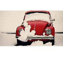 Winter Reds Photographic Print