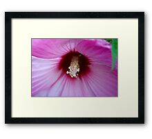 Inside the Hibiscus 5 Framed Print