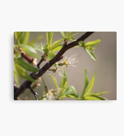 Fruit Tree Branch Canvas Print