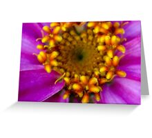 Pretty in Pink 6 Greeting Card