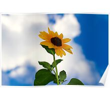 Sunflower in the Clouds 1 Poster