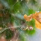 Spiders Leaf by Danielle Espin