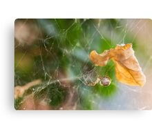 Spiders Leaf Canvas Print