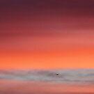 Sunset Flight by Chet  King