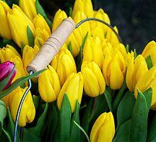 A Bucket of Tulips by Susie Peek