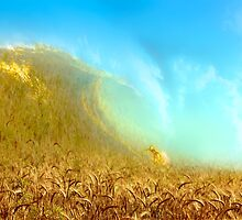 Wheat Wave by MARTIN LITHGOW