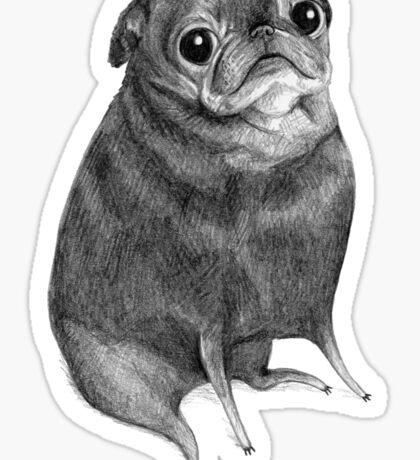 Sweet Black Pug Sticker