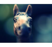 He Fades Photographic Print