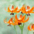 Fairies of Flowers by Marilyn Cornwell