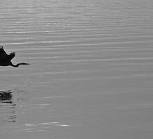 HERON IN FLIGHT by JOHN J. SWEENEY, BLACKJACK'S GALLEY