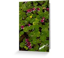 Vivid Fuchsia Waterlilies - a Mediterranean Delight from Barcelona Greeting Card