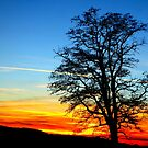Winter Sunset & Tree Silhouette by ©The Creative  Minds