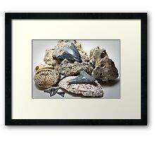 Sharks Teeth and Coral Framed Print