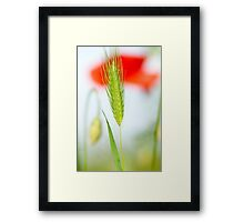 Grass and red poppy Framed Print