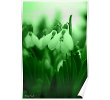 Snowdrop Abstract Poster